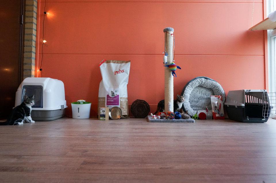 10 katten spullen die je nodig hebt + TIPS & Prijs