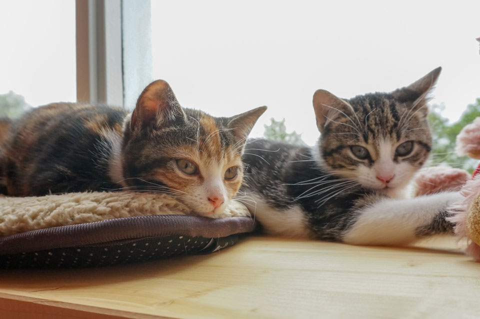 2 kittens liggen op zelfgemaakte vensterbank