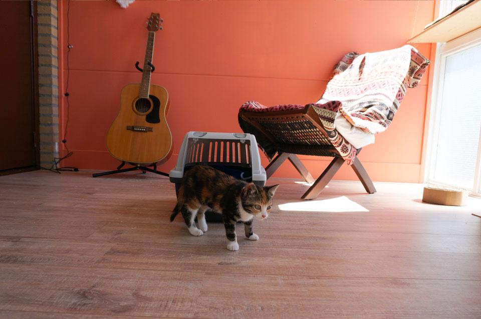 kitten snuffelt in een kleine kamer