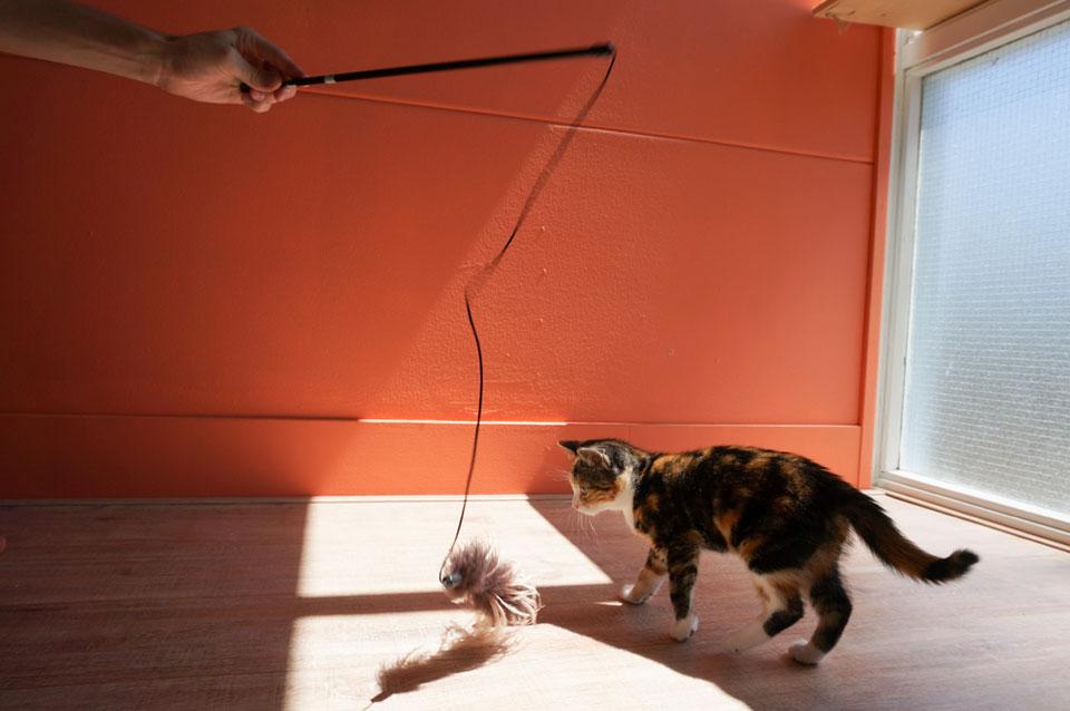 Kitten speelt met baasje
