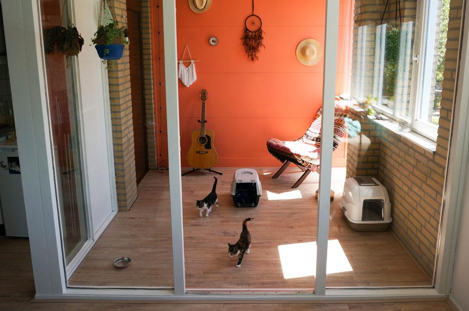 kittens verkennen een kleine ruimte