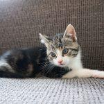 Welkom je nieuwe kitten in huis met deze aanpak!