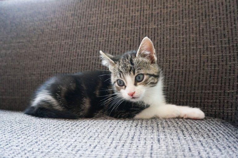 Nieuwe kitten in huis