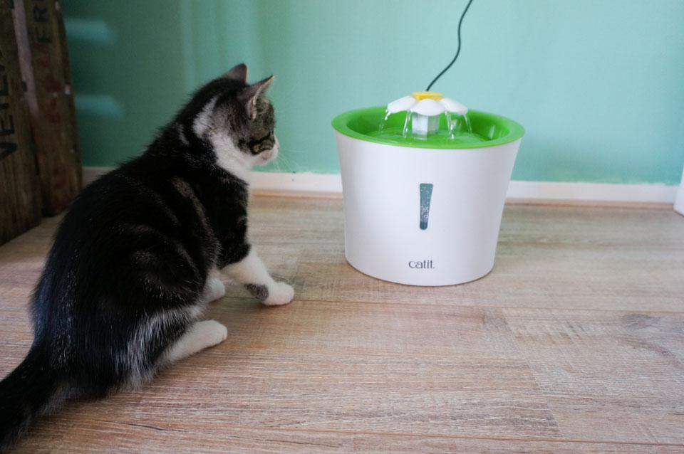 kitten drinkt uit waterfonteintje