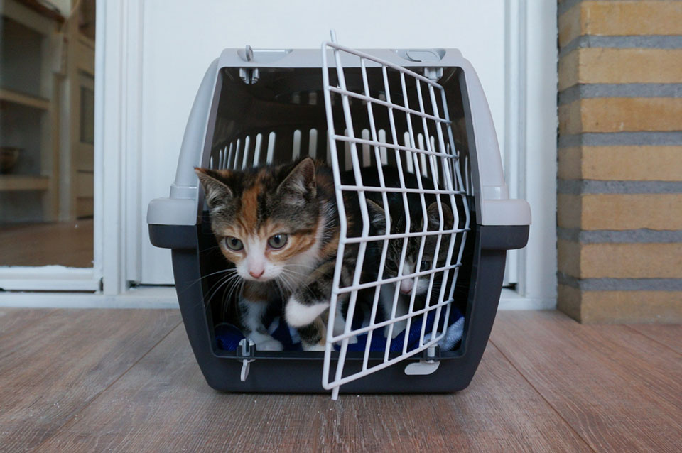 kitten kruipt uit transportbox