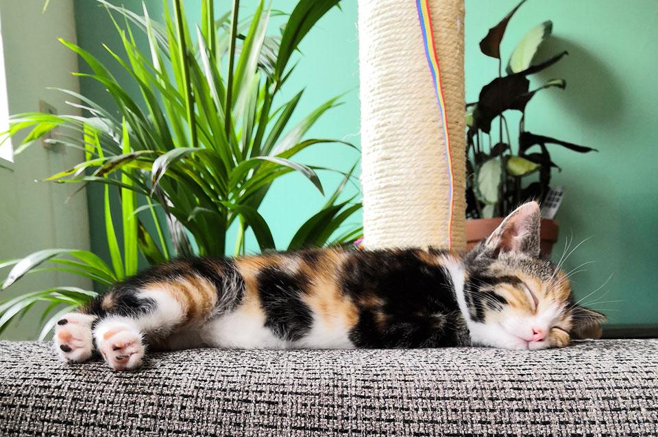 kitten ligt op de bank armleuning