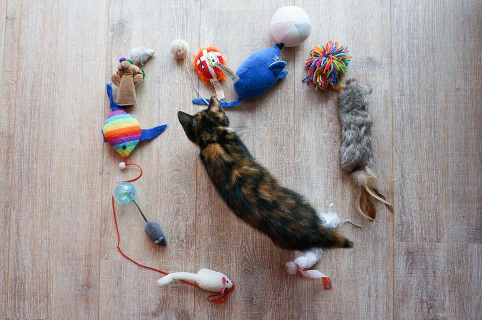 kitten loopt tussen kattenspeeltjes