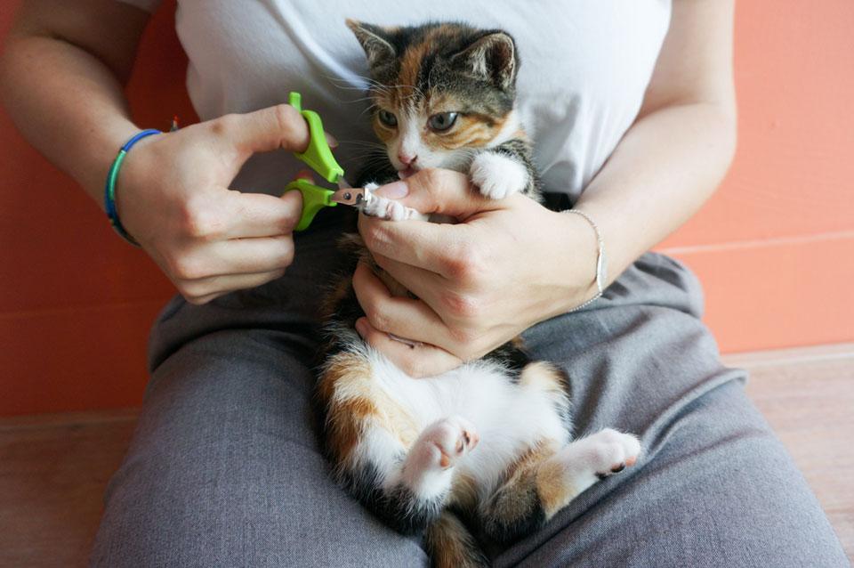 kitten nagels knippen