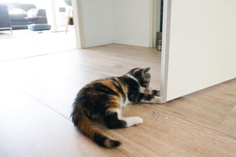 kitten speelt met pootjes bij de deur