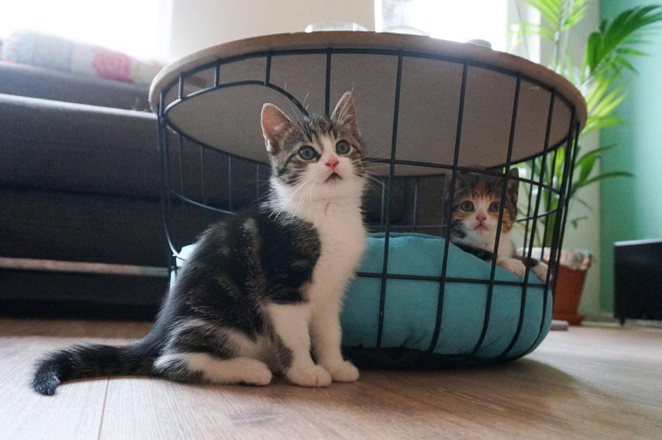 kittens in bijzettafel met mandje