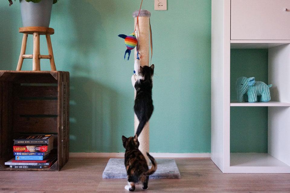 kittens klimmen in de krabpaal