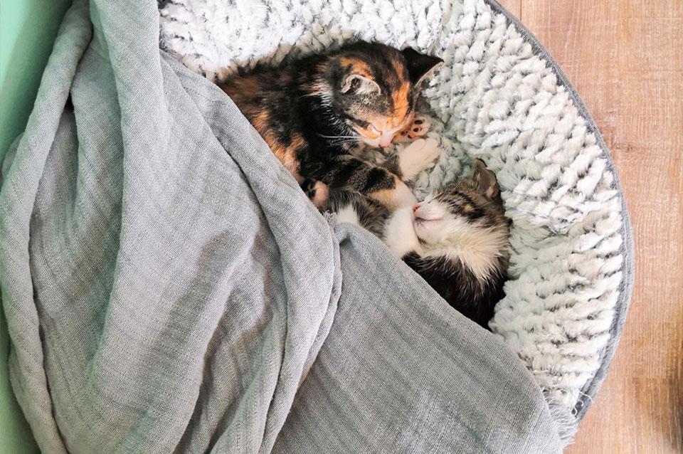 Kittens slapen in kattenmandje