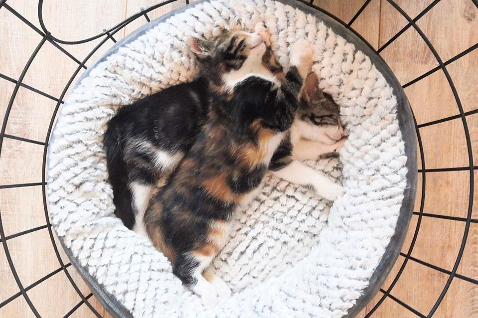twee kittens knuffelen in kattenmandje