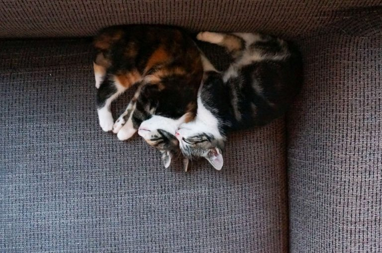 twee kittens knuffelen op de bank