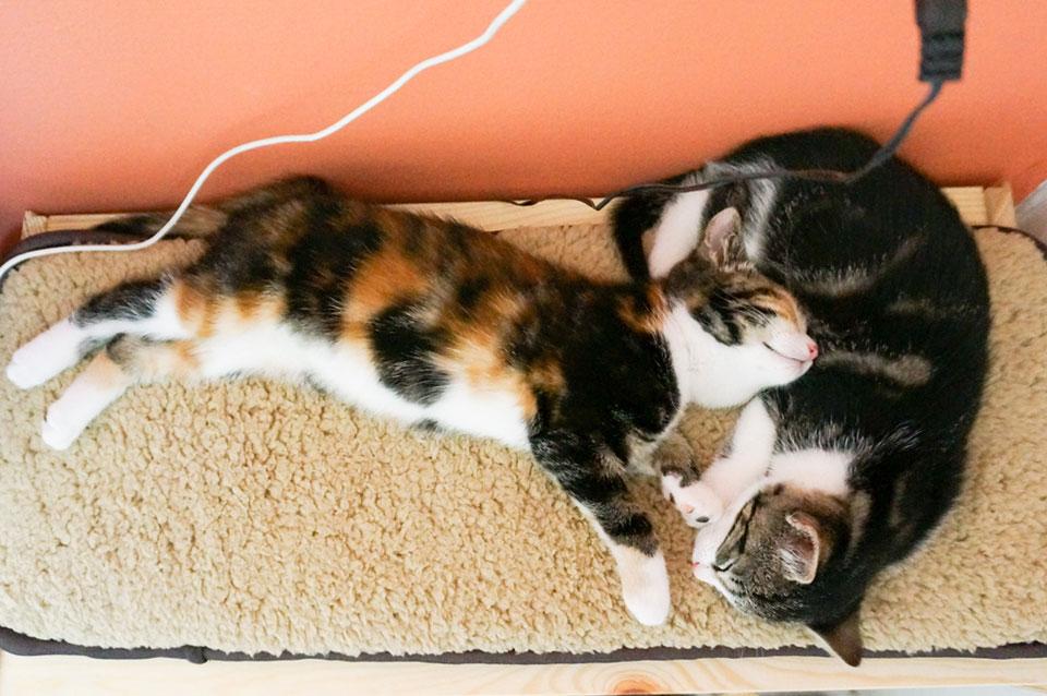 twee kittens knuffelen op kattenkussen