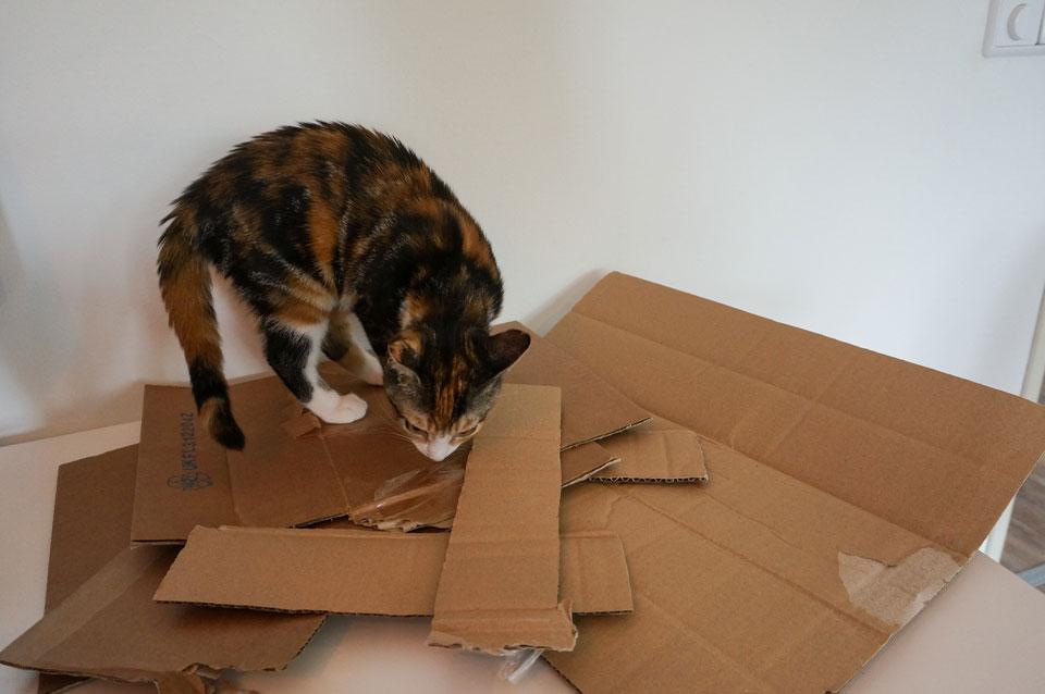 Kartonnen dozen voor krabkarton