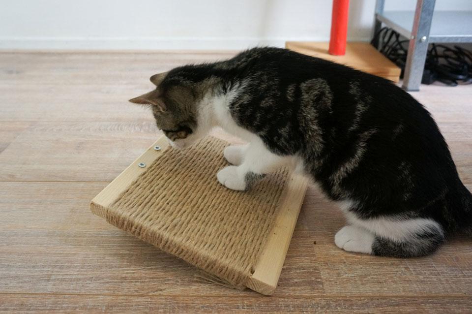 Kitten gebruikt DIY krabplank