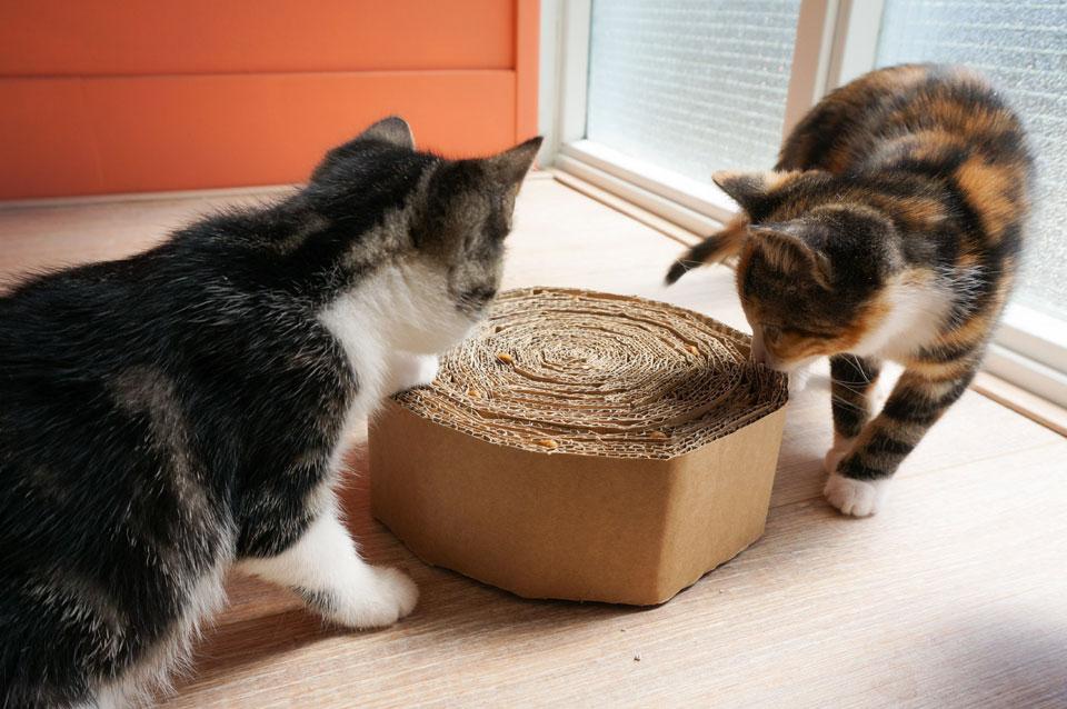 Kittens gebruiken DIY krabkarton