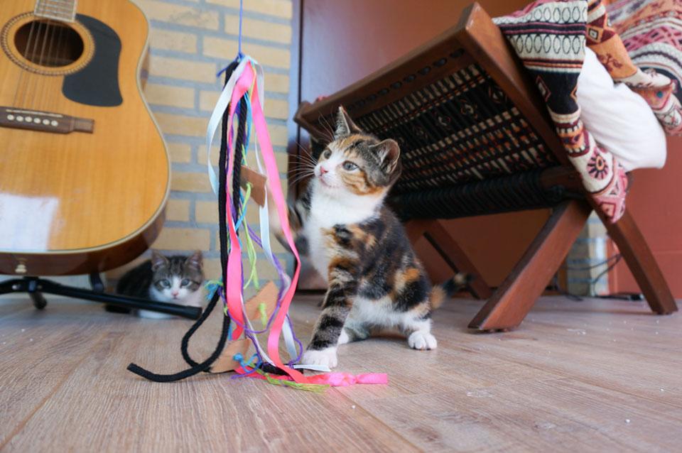 Momo speelt met DIY kattenhengel