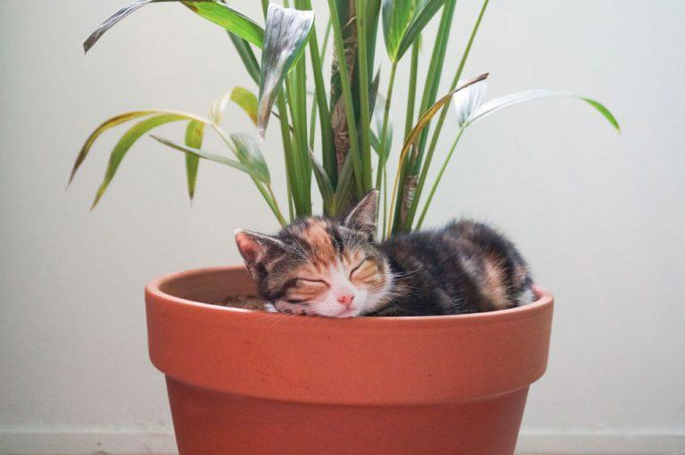 kitten ligt in een plant