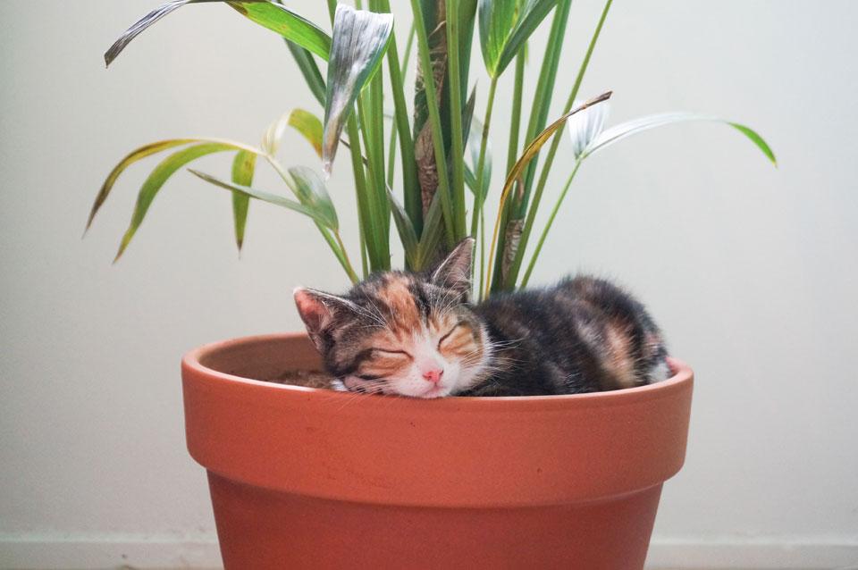 Heb jij giftige of katvriendelijke kamerplanten?