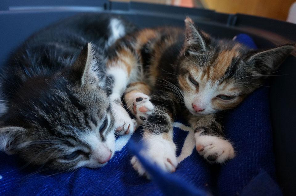 Adoptiedag kittens Momo en Yuki