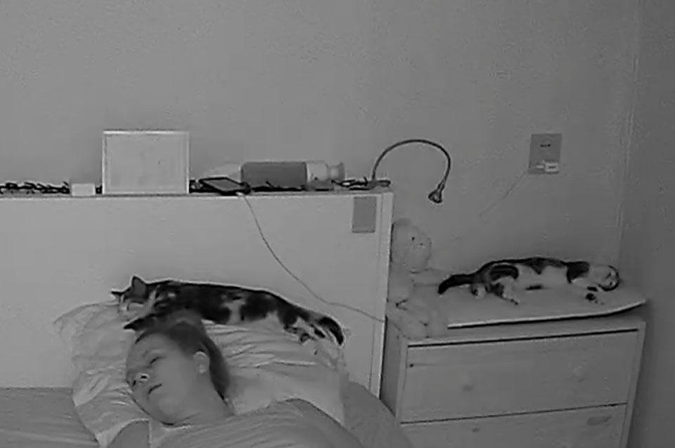 Huisdier camera nachtfoto infrarood