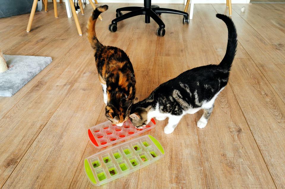 IJsblokjesvorm voedsel puzzel voor katten