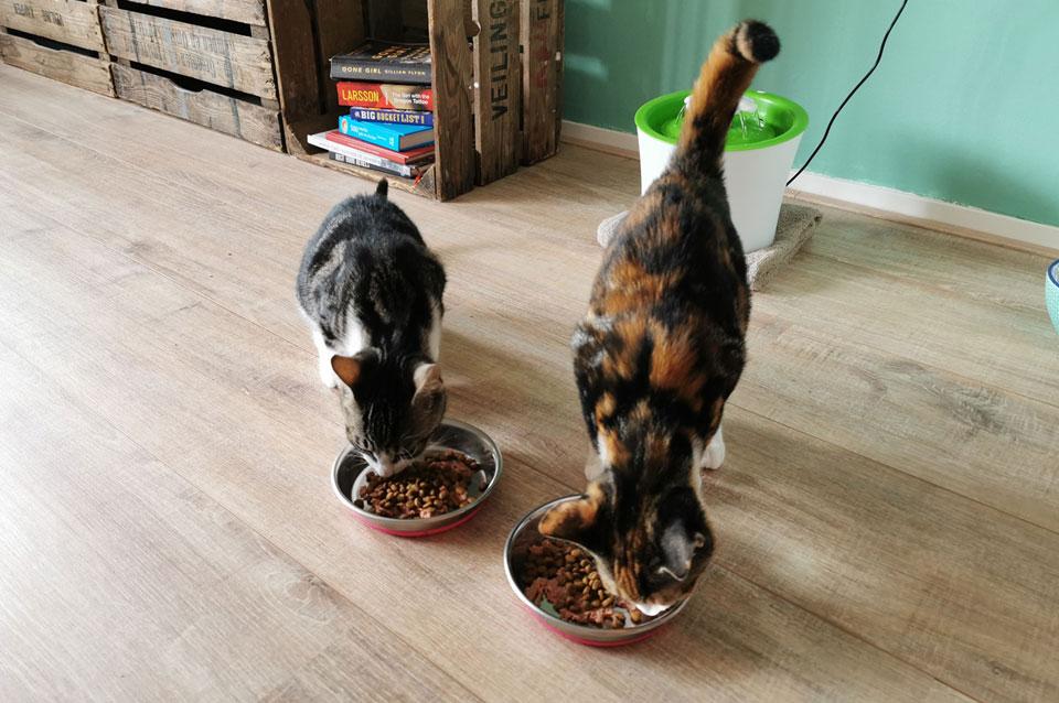 Kittens Momo en Yuki worden beloond met eten na ontwormpil