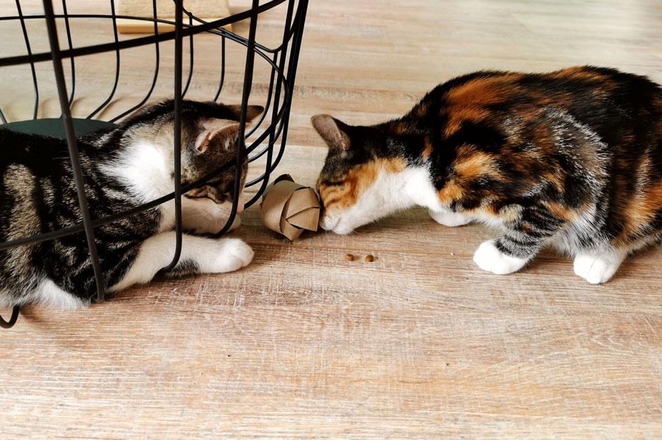 Kittens spelen met WC-rol voedsel puzzel