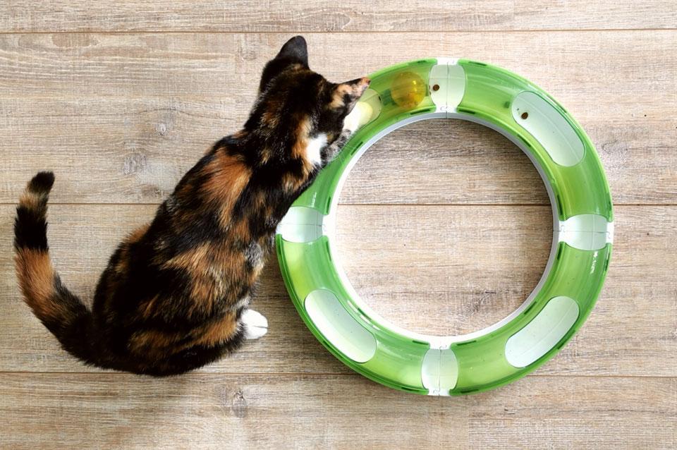 Speelcircuit omgetoverd tot voedsel puzzel voor katten
