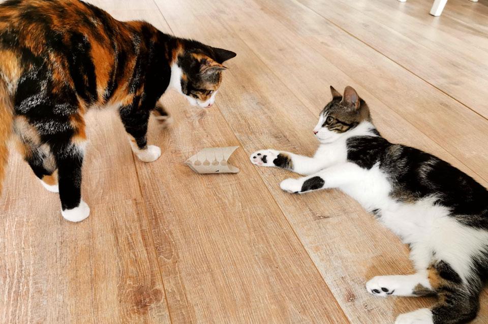 WC-rol voedsel puzzel voor katten