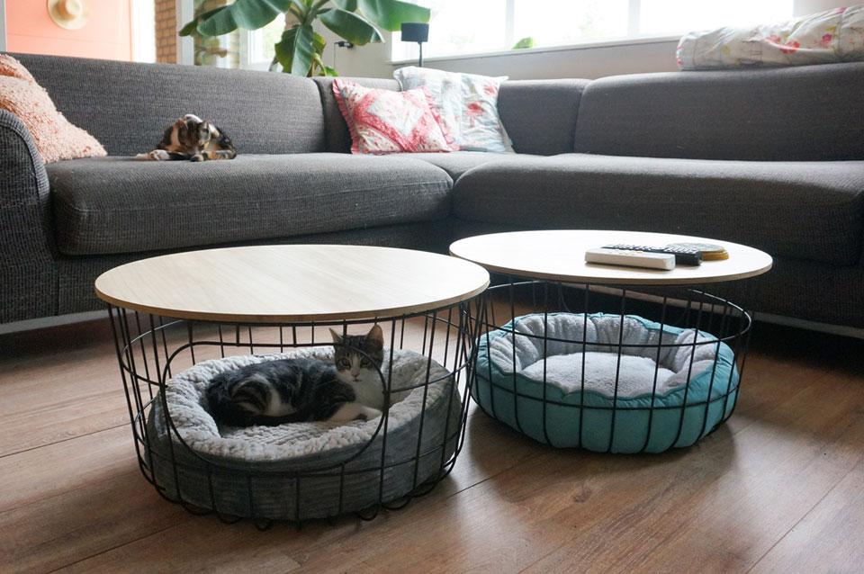 3 musthaves voor elke kattenliefhebber!
