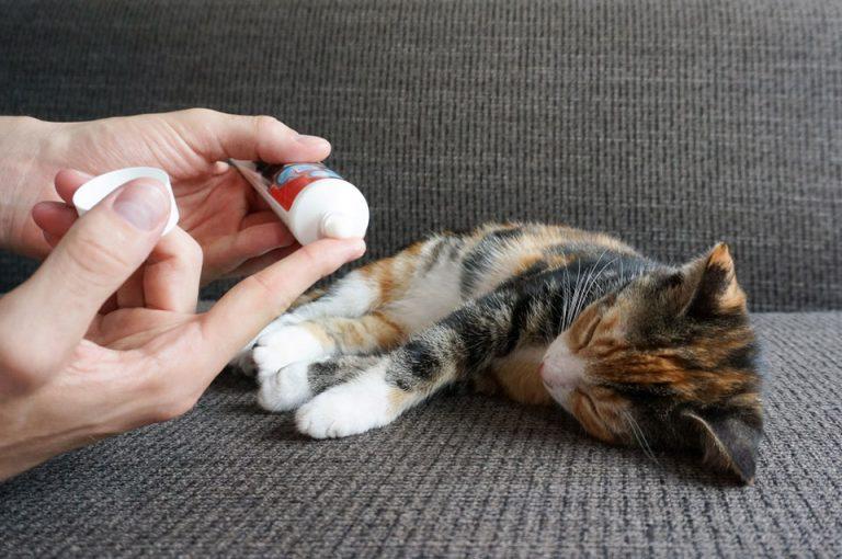 kitten momo op de bank met set tandpasta voor katten