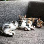 Kitten alleen thuis laten: leer het aan!
