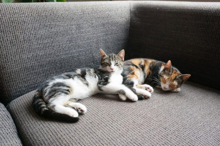 twee kittens alleen thuis slapend op de bank