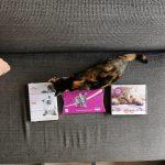 3 Kitten proefpakketten die je wilt bestellen!